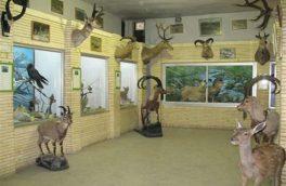 بازدید رایگان از گنجینه تنوع زیستی حفاظت محیط زیست خراسان جنوبی