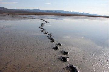 نیمی از حجم تالاب کجی نهبندان به دنبال بارندگیهای اخیر آبگیری شد.