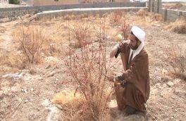 اهدای ۱۱۱ درخت در طرح شجره طیبه
