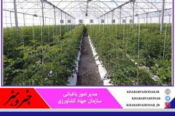 ۶۰ هکتار کشت گلخانهای در خراسان جنوبی ایجاد میشود