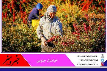 ارائه تسهیلات برای احداث بارگاههای زرشک در خراسان جنوبی