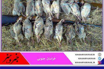لاشه ۳۰قطعه پرنده وحشی در شهرستان خوسف کشف و ضبط شد