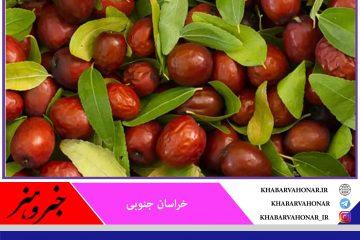 تولید محصول عناب در خراسان جنوبی ۳۰ درصد کاهش یافت