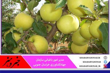 پیش بینی برداشت بیش از هزار تن سیب در خراسان جنوبی
