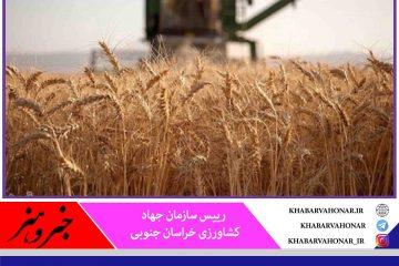 ۲۰ هزار تن گندم از کشاورزان خراسان جنوبی خریداری شد