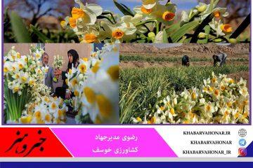 خراسان جنوبی رتبه پنجم تولید گل نرگس در کشور و خوسف هم در استان رتبه نخست