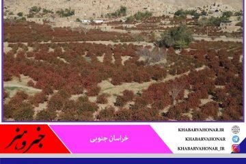 توسعه با تکیه بر ظرفیتهای بومی خراسان جنوبی