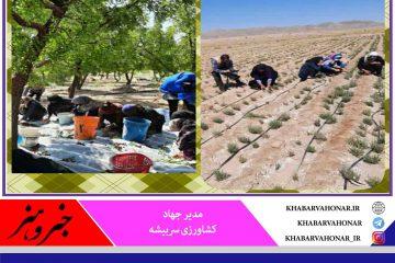 صندوق های خرد زنان روستایی درشهرستان سربیشه عامل اشتغال جامعه زنان درروستاهای شهرستان
