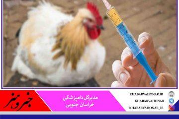 ورود ۷۵۰ هزار دوز واکسن آنفلوانزای فوق حاد پرندگان به خراسان جنوبی