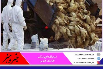 قرمز شدن وضعیت آنفلوآنزای پرندگان در خراسان جنوبی با پنهان کاری یک مرغدار
