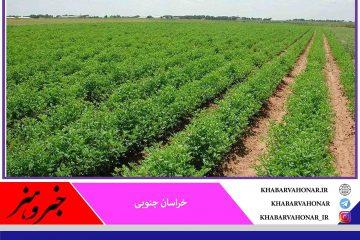 تولیدات زراعی خراسان جنوبی ۱۷۸ هزار تن افزایش یافت