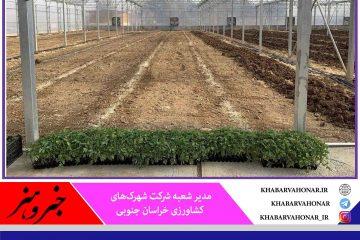 ۱۰۰ میلیارد تومان برای احداث گلخانه در خراسان جنوبی جذب شد