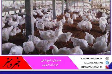شرایط آنفلوانزای پرندگان در خراسان جنوبی رو به بهبودی است