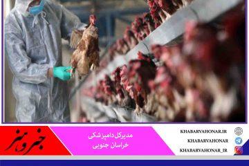 تاخیر در گزارشدهی باعث گسترش آنفلوانزای پرندگان در خراسان جنوبی شد