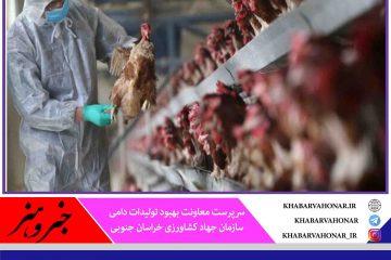 جذب اعتبارات برای واحدهای خسارت دیده از آنفلوآنزای پرندگان در خراسان جنوبی
