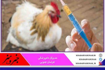 واکسینه شدن ۹۰ درصدی واحدهای مرغداری خراسان جنوبی