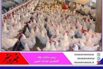 صادرات ۷۰ درصد تولیدات مرغ خراسان جنوبی به استانهای مجاور و خارج از کشور