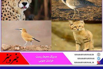 وجود ۷ منطقه حفاظت شده و ۳ پناهگاه حیات وحش در خراسان جنوبی