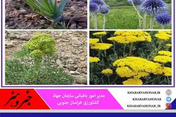 توسعه کشت گیاهان دارویی در خراسان جنوبی حمایت میشود
