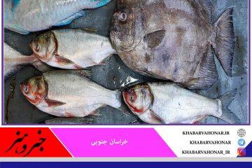 تولید ۱۴۲۸ تن ماهی گرمابی و سردابی طی سال گذشته در استخرهای خراسان جنوبی