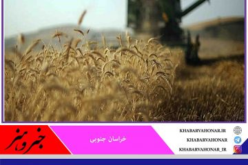 ۴۳ هزار تن گندم در خراسان جنوبی برداشت میشود