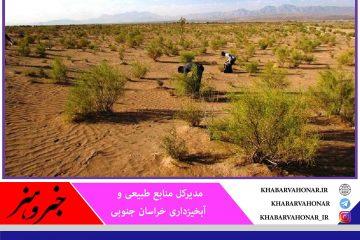 برداشت گیاهان دارویی از مراتع خراسان جنوبی ممنوع است