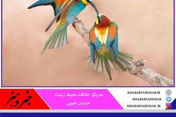 سرشماری بیش از ۶ هزار پرنده مهاجر در خراسان جنوبی
