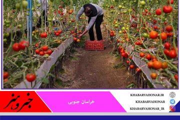 ۲۶ واحد گلخانه شهرستان درمیان به دانشآموختگان واگذار شد
