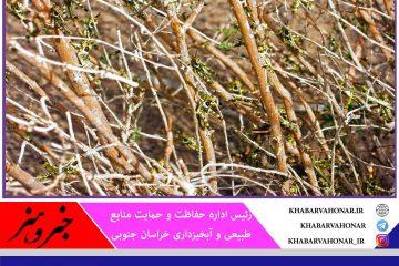 سم پاشی ۳۲۰۰ هکتار از اراضی خراسان جنوبی علیه آفت ملخ کوهاندار