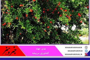 مبارزه بیولوژیک با تاسیس انسکتاریوم سربیشه با آفات گیاهی در خراسان جنوبی توسعه یافت
