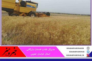 هزار و ۶۰۰ تن گندم در خراسان جنوبی خریداری شد