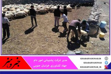 خرید روزانه ۱۰۰ رأس دام از عشایر خراسان جنوبی