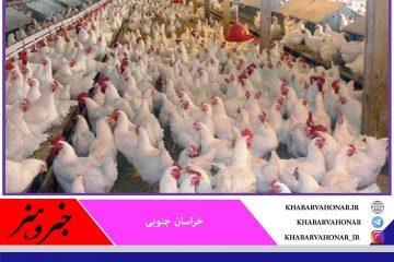 سه هزار قطعه مرغ در شهرستان درمیان تلف شدند