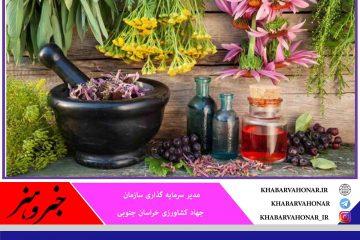 تخصیص ۳۴ میلیارد تومان اعتبار ملی برای کشت گیاهان دارویی خراسان جنوبی