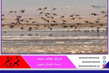 تالاب کجی نمکزار نهبندان زیستگاه پرندگان مهاجر شرق کشور  احیا می شود