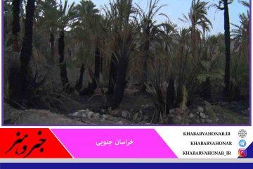 ٣٠ نخل در نخلستان روستای گردشگری بندان شهرستان نهبندان در آتش سوخت