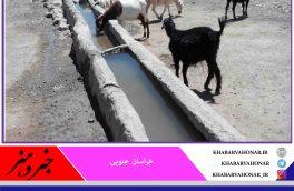 جمعیت دامی عشایر در شهرستان سربیشه ۱۰ درصد کاهش یافت