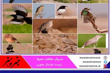 با همکاری دوستداران محیط زیست شناسایی و ثبت ۵۵ گونه جدید پرنده در خراسان جنوبی