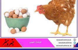 تخم مرغ خیال ارزانی ندارد/ زمزمه گرانی مرغ هم به گوش می رسد